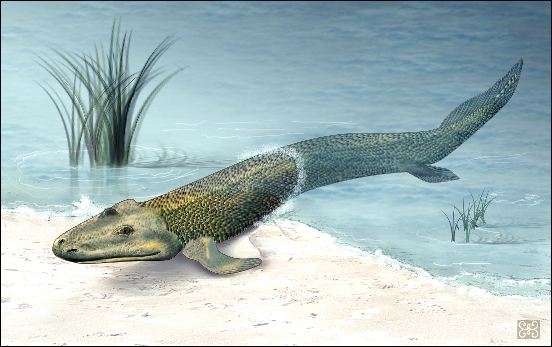 fossil_fish1_h1